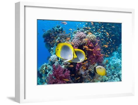 Coral Reef Scenery with Fish-Georgette Douwma-Framed Art Print