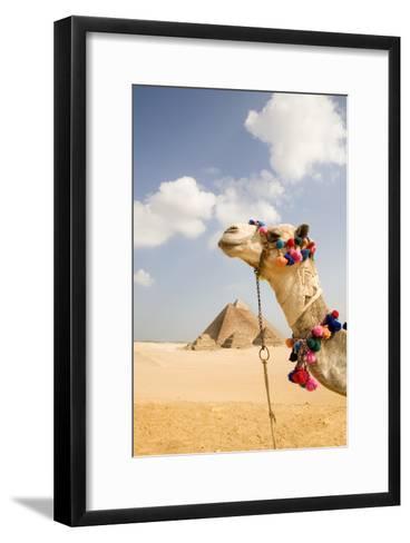 Camel in Desert with Pyramids Background-Grant Faint-Framed Art Print