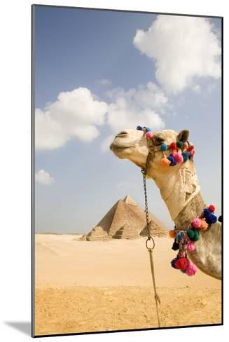 Camel in Desert with Pyramids Background-Grant Faint-Mounted Photographic Print