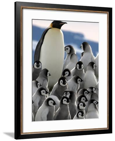Penguin Creche in Antarctica-David Yarrow Photography-Framed Art Print