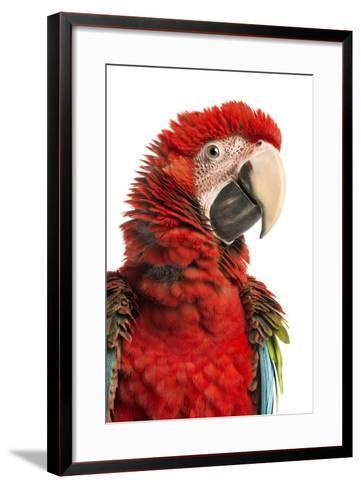 Close-Up of a Green-Winged Macaw-Life on White-Framed Art Print