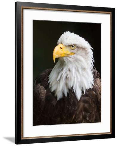 Mean, Moody and Magnificent-Janet Marshall-Framed Art Print