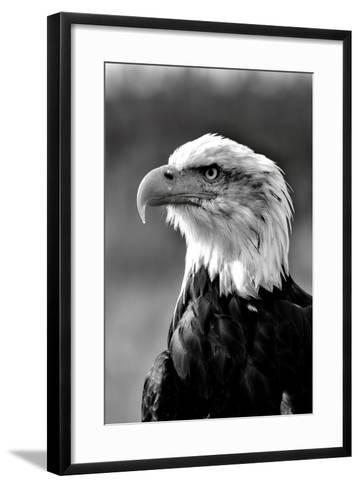 Bald Eagle in Black and White-Andrea & Tim photography-Framed Art Print
