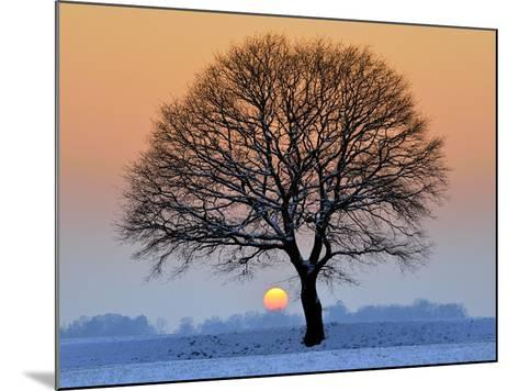 Winter Sunset with Silhouette of Tree-pierre hanquin photographie-Mounted Photographic Print