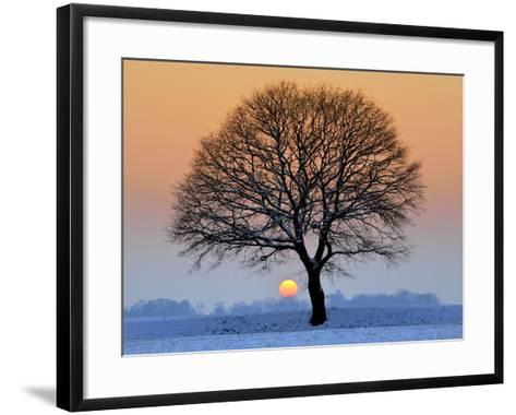 Winter Sunset with Silhouette of Tree-pierre hanquin photographie-Framed Art Print