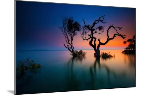 Trees in Bay at Sunset-visionandimagination.com-Mounted Photographic Print