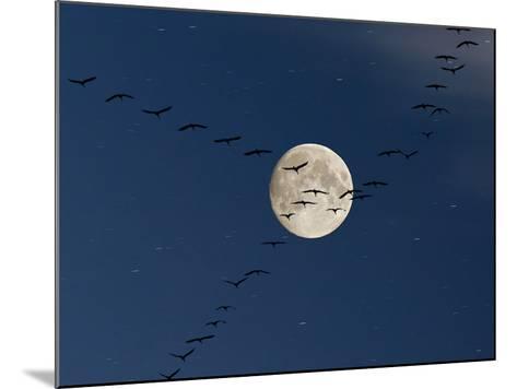 Cranes Flying to Moon-Sebastian Schneider-Mounted Photographic Print