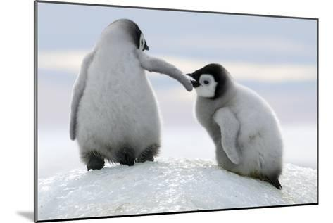 Penguins-David Yarrow Photography-Mounted Photographic Print