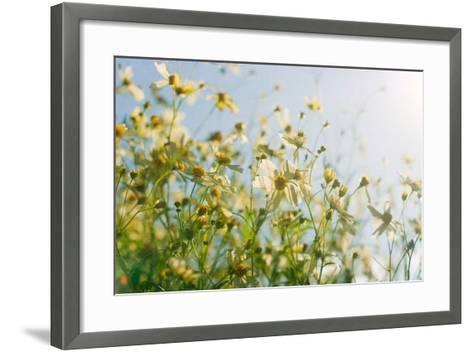 Cosmos Flowers-Jill Ferry-Framed Art Print