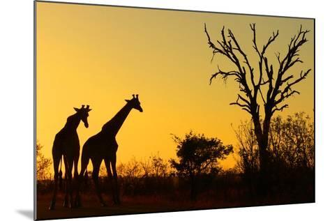 Sunrise in African Bush--Mounted Photographic Print