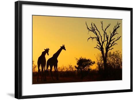 Sunrise in African Bush--Framed Art Print