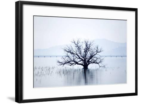 Dead Tree and High Country Rail Trail on Lake Hume-Virginia Star-Framed Art Print