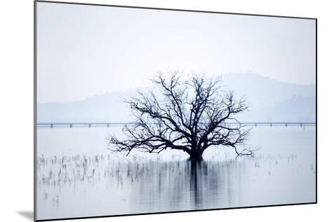 Dead Tree and High Country Rail Trail on Lake Hume-Virginia Star-Mounted Photographic Print