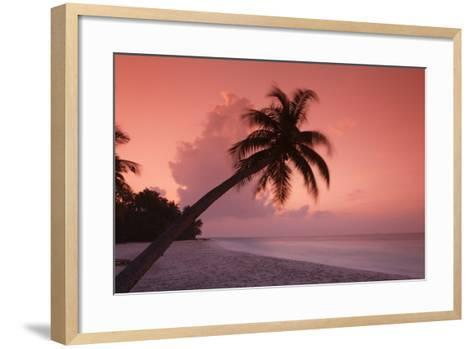Palm on Filitheyo Island at Sunset-Massimo Pizzotti-Framed Art Print