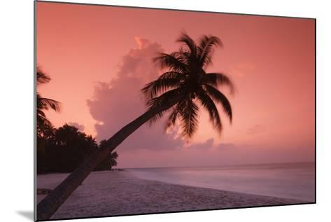 Palm on Filitheyo Island at Sunset-Massimo Pizzotti-Mounted Photographic Print