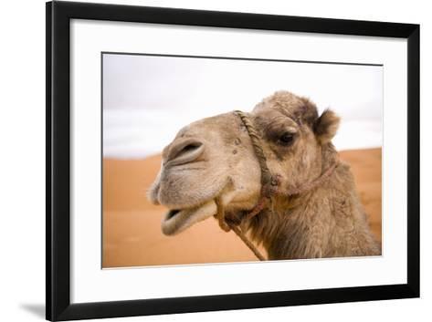 Portait of a North African Camel (Camelus Dromedarius) Morocco, North Africa-Ben Queenborough-Framed Art Print
