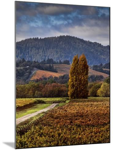 Path Leading to Two Large Trees in Vineyard-Bob Cornelis-Mounted Photographic Print