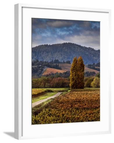 Path Leading to Two Large Trees in Vineyard-Bob Cornelis-Framed Art Print