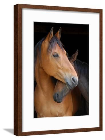 Head Shot of Horse and Pony Hugging on Dark B/G-Anne Louise MacDonald-Framed Art Print