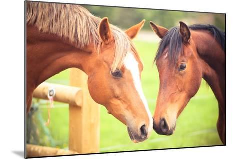Two Horse-Sasha Bell-Mounted Photographic Print