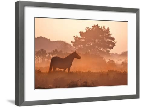 New Forest Pony in Mist at Dawn.-Julie Mitchell/Southdowns Photographics-Framed Art Print