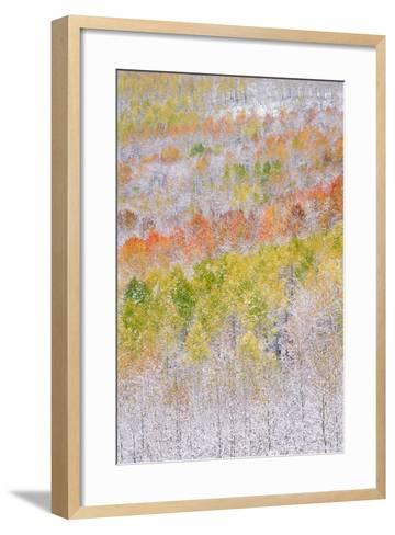 A Forest of Aspen Trees in the Wasatch Mountains, with Striking Yellow and Red Autumn Foliage. Snow-Mint Images - David Schultz-Framed Art Print