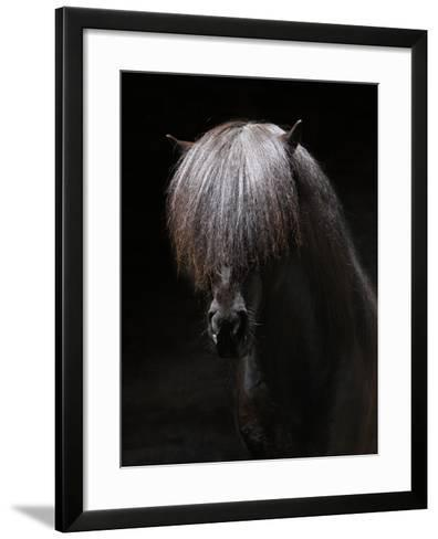Portrait of Stallion-Arctic-Images-Framed Art Print