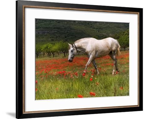 Poppies and Horse-Joanot-Framed Art Print