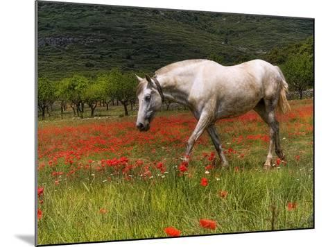 Poppies and Horse-Joanot-Mounted Photographic Print