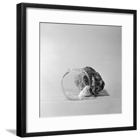 Trapped-Three Lions-Framed Art Print