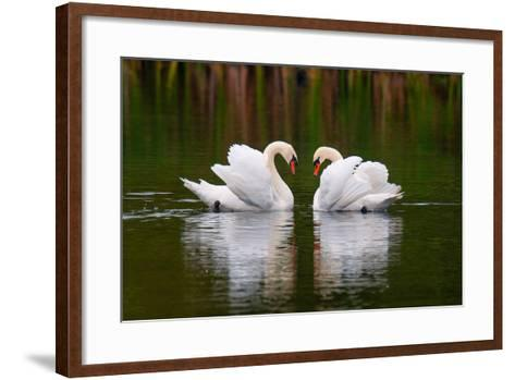 Love Birds-Colin Carter Photography-Framed Art Print