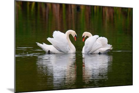 Love Birds-Colin Carter Photography-Mounted Photographic Print
