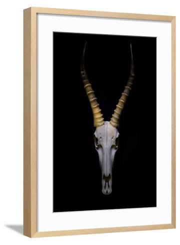 Antelope Skull Floating on Background.-Chris Parsons-Framed Art Print
