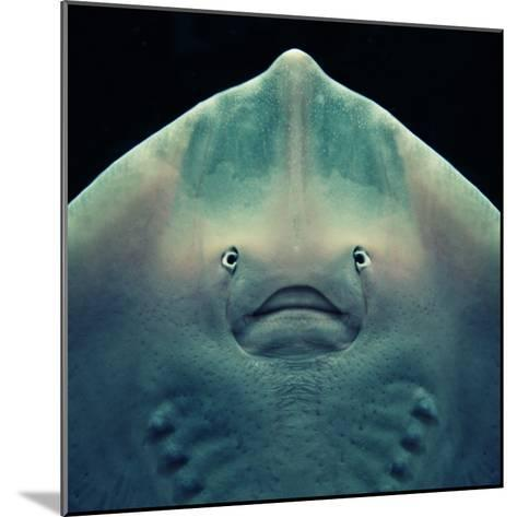 Stingray-Con Ryan-Mounted Photographic Print