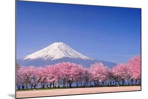 Fuji and Sakura-Peerapat Tandavanitj-Mounted Photographic Print