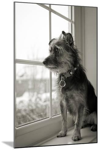 Looking Out-Steve K Photography-Mounted Photographic Print