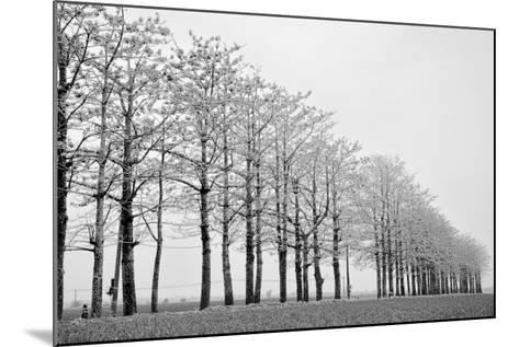 Trees in Row-michaeliao27-Mounted Photographic Print
