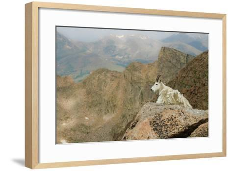 Rocky Mountain Goat-Robin Wilson Photography-Framed Art Print