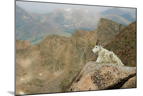 Rocky Mountain Goat-Robin Wilson Photography-Mounted Photographic Print