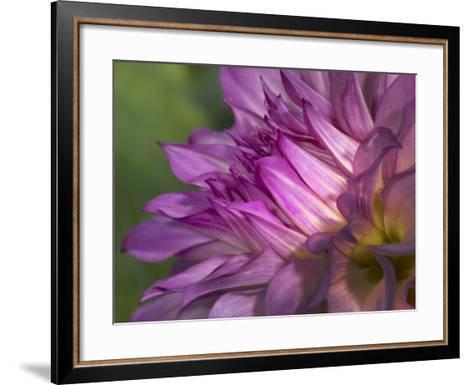 Dahlia close Up-Russell Burden-Framed Art Print