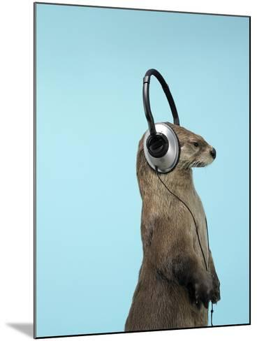 Sea Otter Listening to Headphones-Andy Reynolds-Mounted Photographic Print
