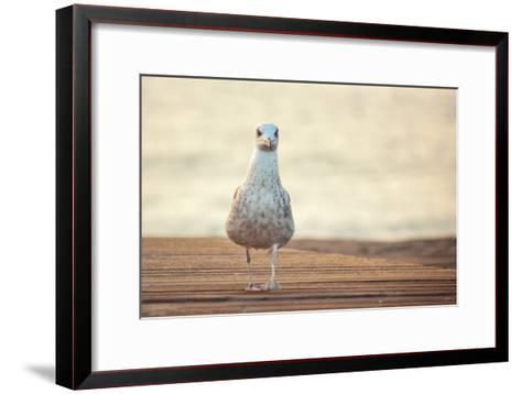 Seagull-by Juanedc-Framed Art Print