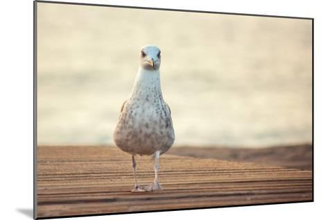 Seagull-by Juanedc-Mounted Photographic Print