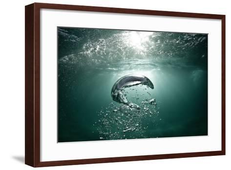 Underwater Air Bubbles Rise to the Surface.-Mark Tipple-Framed Art Print