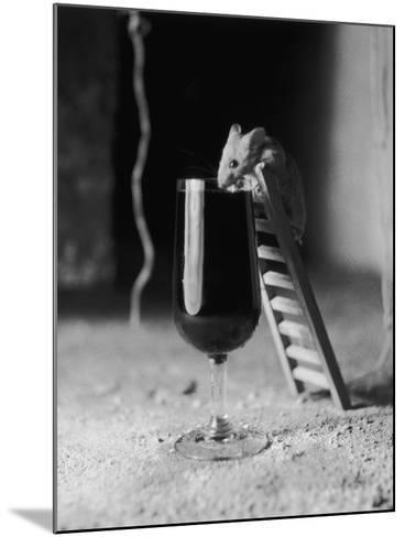 Soused Mouse-Charles Hewitt-Mounted Photographic Print