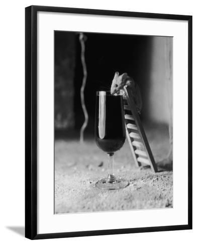Soused Mouse-Charles Hewitt-Framed Art Print