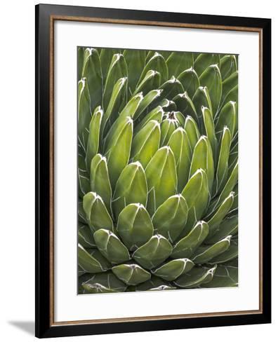 Agave Victoriae Reginae-Andy Sotiriou-Framed Art Print