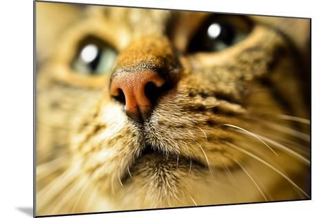 Tiger Cat Nose-Volanthevist-Mounted Photographic Print