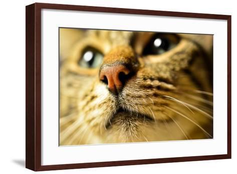 Tiger Cat Nose-Volanthevist-Framed Art Print