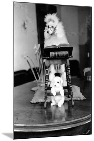 Two Poodles-Carl Sutton-Mounted Photographic Print